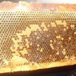 Дядо на 95 лета: Ям мед само от пита заради божията частица на дълголетието!   Опознай България